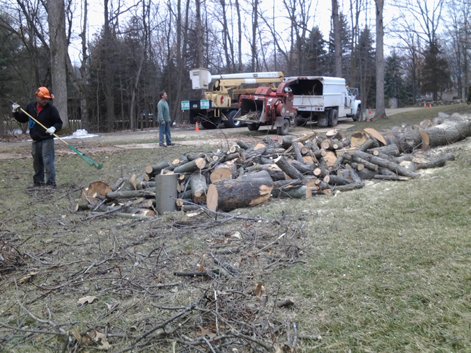 Arborist, Remove a Tree, Oakland County
